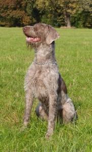Pavlovs Dog