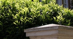 investing hedge
